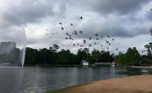 Birds at Hermann Park