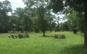 Memorial Park Picnic Area